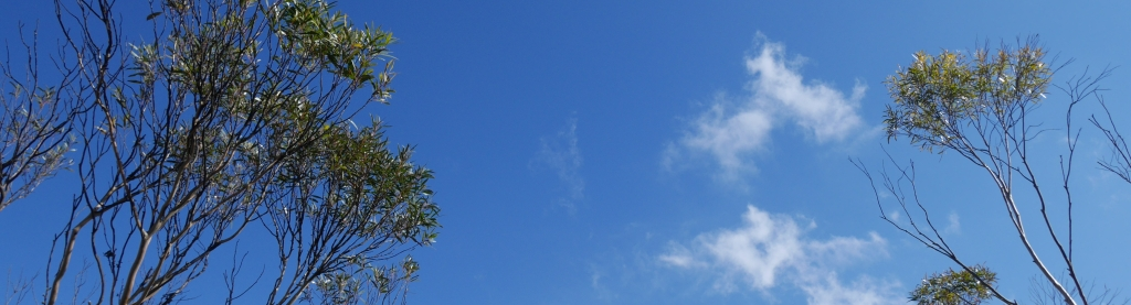 Eukalyptus Bäume Blue Mountains